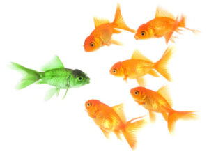 School Of Goldfish | Extended Thinking