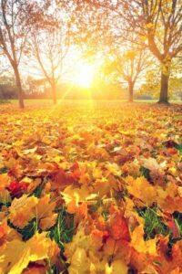 Marketing planning - get your business fit for Autumn