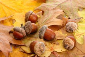 Marketing planning autumn - weigh up your marketing channels effectiveness