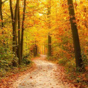 Marketing planning Autumn - check your customer journey